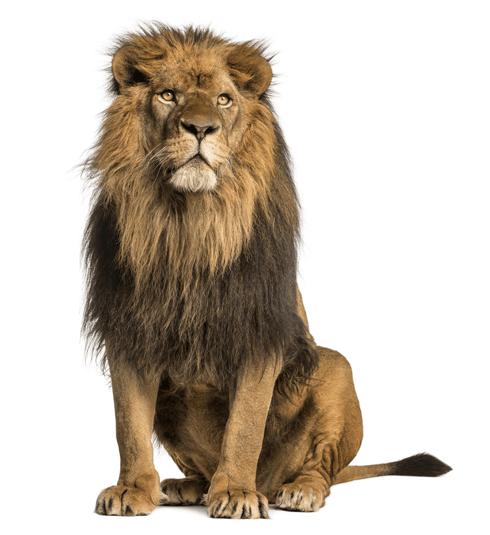 predatorus - lion